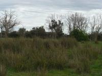 6_grass.jpg